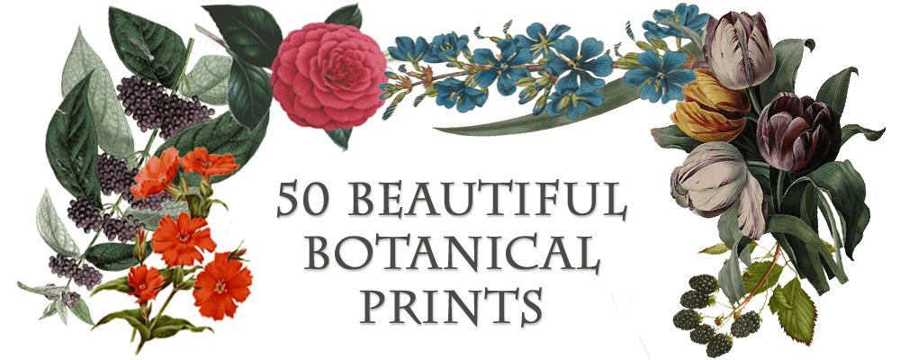 Beautiful Botanical Prints