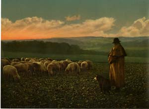 Shepherd, unknown location
