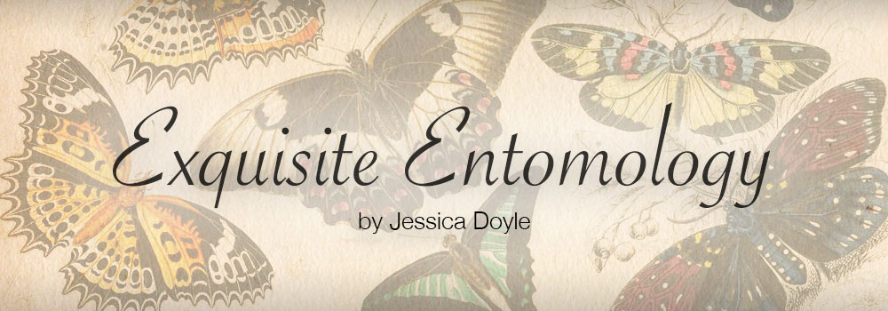 Entomology Books, Plates & Prints